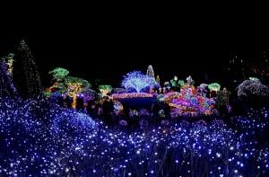 Morning-Calm-Gardens-Lighting-Festival-2012-Gapyeong-South-Korea
