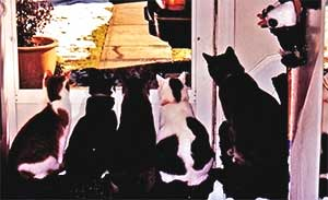 cats_window