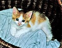 kitten_basket