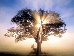 light-tree-gaia-