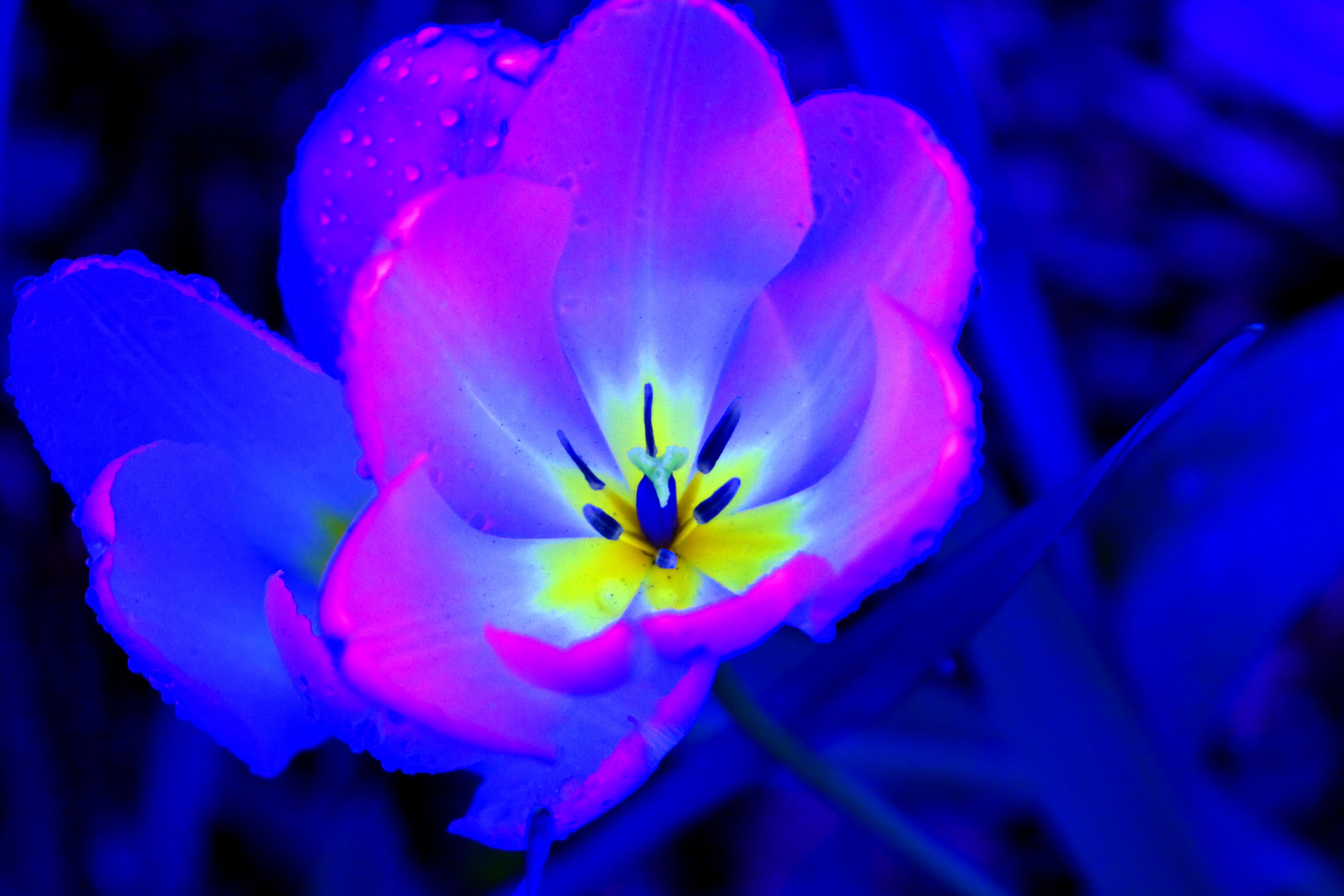 Really Beautiful Flowers Choice Image Flower Wallpaper Hd